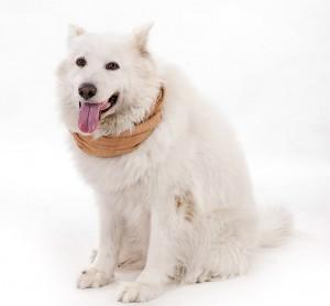 Bild: Hund